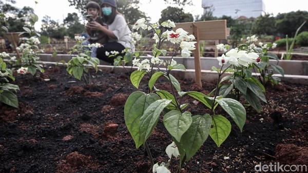 Selain tanaman sayur terdapat juga sejumlah tanaman bunga.