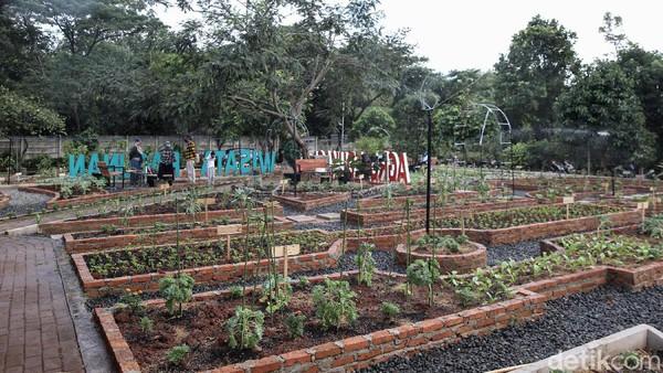 Sejumlah pengunjung melihat beragam tanaman sayur.