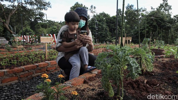 Seorang pengunjung mengajak anaknya mengamati tanaman sayur.