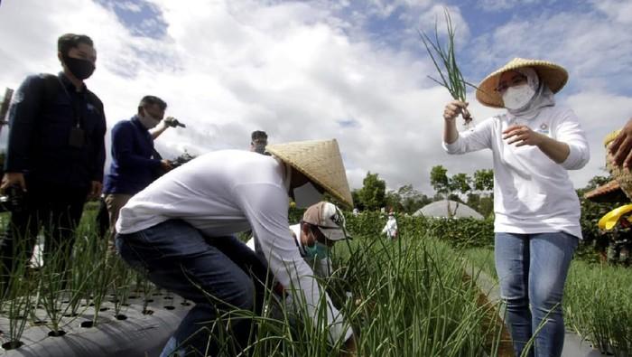 Festival Hortikultura digelar di kawasan Eduagrowisata, Kebun Ambu, Purwakarta, Jawa Barat. Kegiatan ini untuk meningkatkan kesadaran masyarakat untuk menanam.