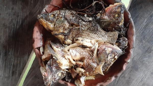 Ikan yang dimasak bisa ikan mujair atau ikan gabus Sentani. Garam dan bumbu batang keladi akan merasuk dalam ikan. Selain itu, ikan akan terasa empuk sampai tulang. Rasanya tentu saja enak! (Hari Suroto/Istimewa)