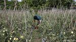 Kisah Anak Muda di Perbatasan RI, Sukses Bertani Saat Pandemi