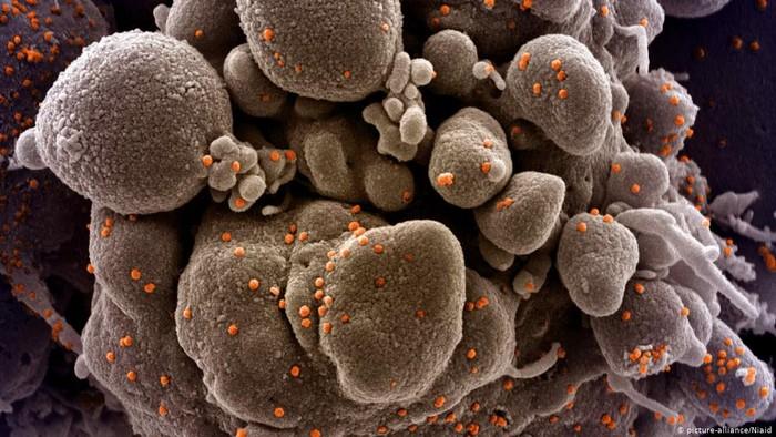 Selain Inggris, Negara-negara Ini juga Deteksi Mutasi Baru Virus Corona