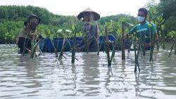 Gojek Mulai Tanam Ribuan Mangrove dari Penyerapan Jejak Karbon