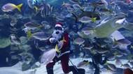 Keseruan Santa saat Renang Bersama Ikan