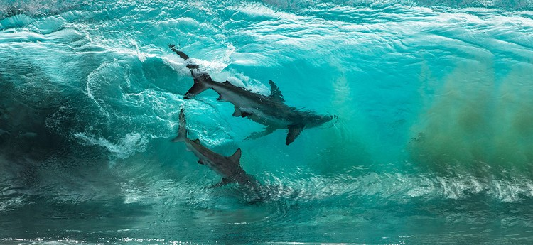 Ocean Photography Awards 2020