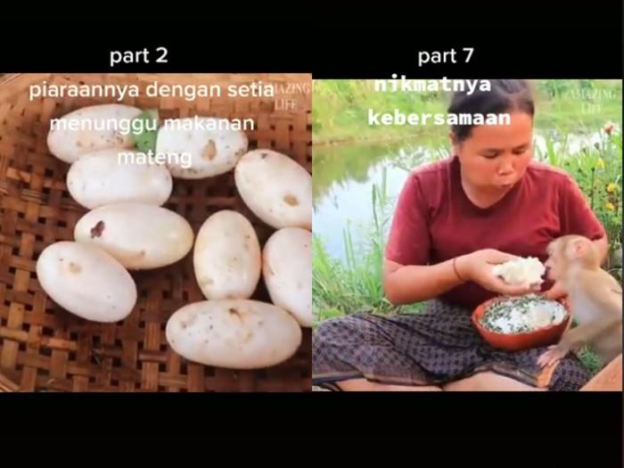 Tak Ada Telur Ayam, Wanita Ini Pilih Masak Telur Buaya Kukus