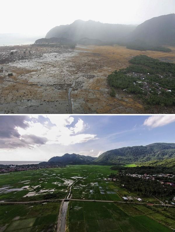Areal persawahan hancur diterjang tsunami 2004 lalu. Kini persawahan itu kembali hijau oleh tanaman padi. Ulet Ifansasti/Getty Images.