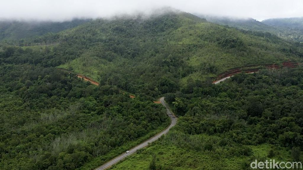 Foto: Hijaunya Hutan Kalimantan yang Jadi Paru-paru Dunia