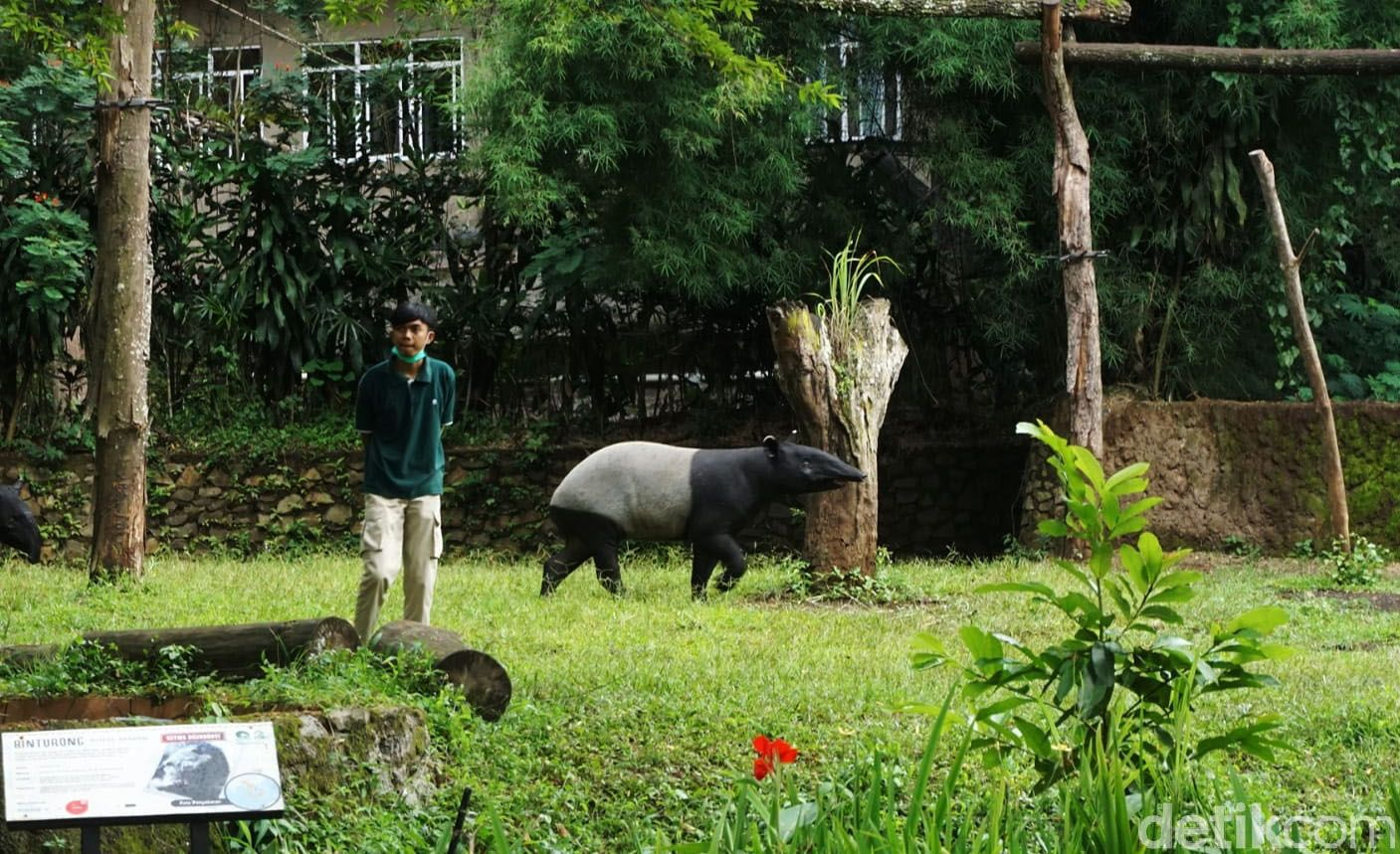 Sebelum pandemi COVID-19, Kebun Binatang Bandung (Bandung Zoological Garden) menjadi salah satu objek wisata primadona wisatawan di Kota Bandung. Namun libur nataru tahun ini tidak seramai tahun sebelumnya.