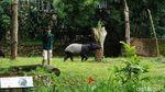 Libur Nataru, Begini Suasana di Kebun Binatang Bandung
