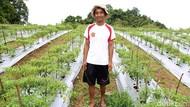 Milenial Didorong Ambil Peluang Kembangkan Sektor Pertanian Modern