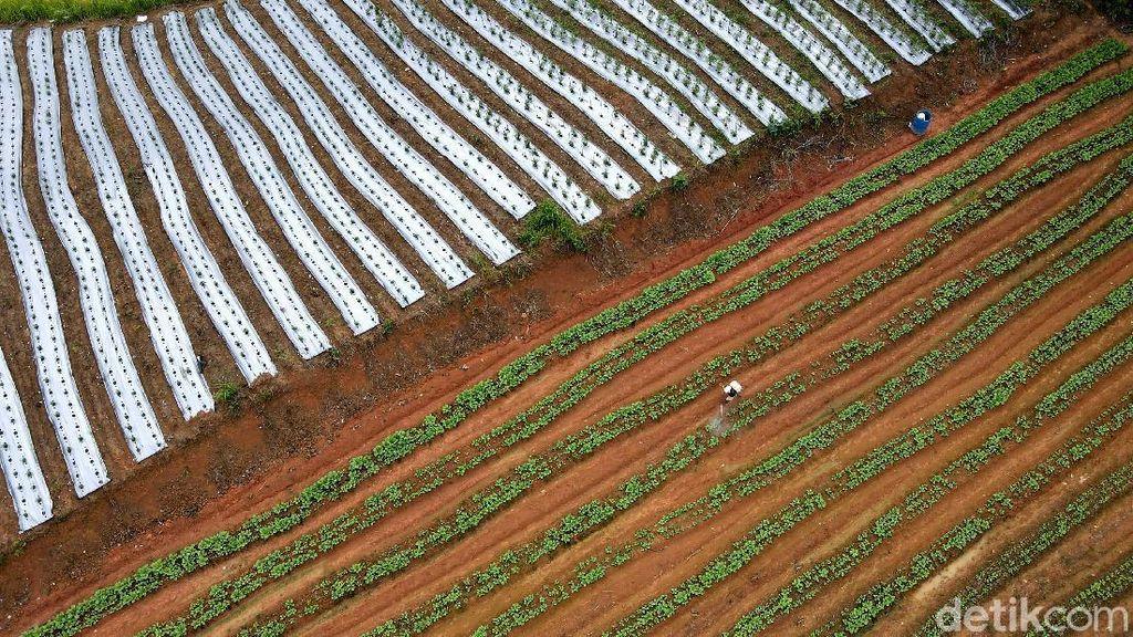 Program Petani Milenial Dimulai Maret, DPRD Jabar Soroti Penyiapan Lahan