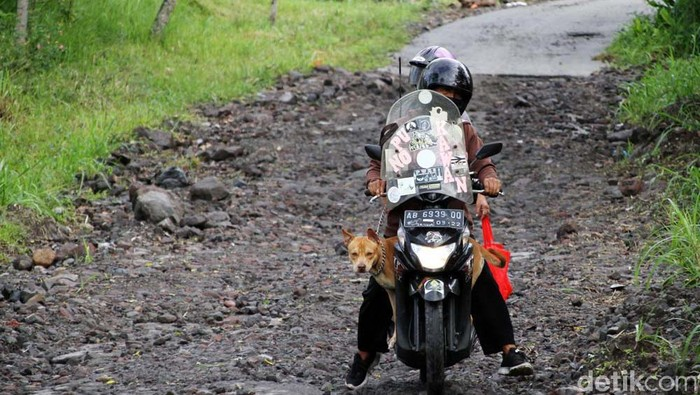 Seorang warga asal Yogyakarta setiap minggu selalu mengajak anjing peliharaannya untuk melihat kondisi puncak Gunung Merapi. Begini aksinya.