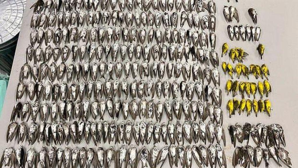 Misteri Kematian Massal Ratusan Ribu Burung Terkuak