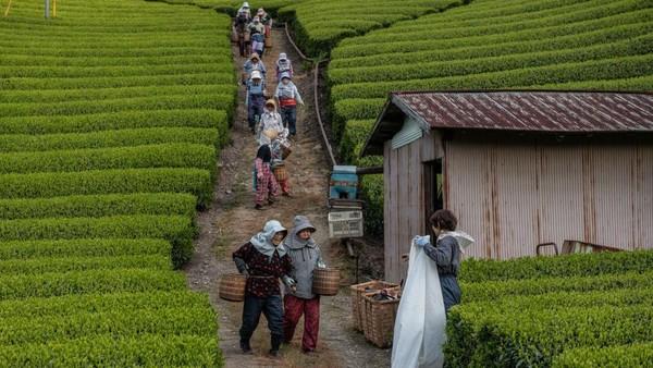 Yoshio dan Masumi juga bisa mengajarkan para wisatawan bagaimana membuat teh dengan tangan dan mereka diakui sebagai Instruktur Teh Jepang.