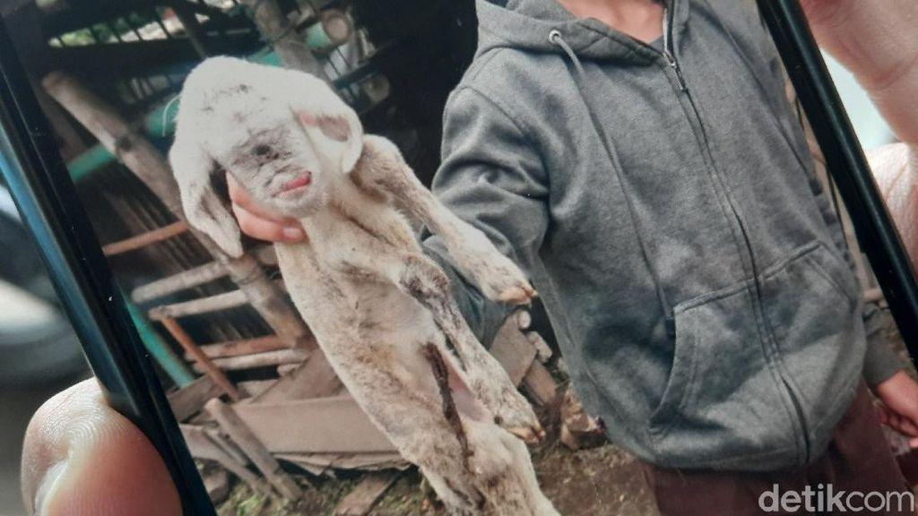 Kagetnya Mbok Darmo Anak Dombanya Bermata 1 dan Berlidah Bengkok