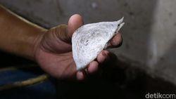 Nilai Jual Tinggi, Sarang Burung Walet Digenjot Masuk China