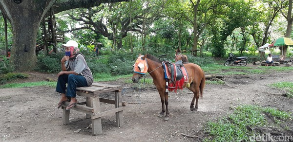 Kamu juga bisa naik dokar atau kuda poni untuk berkeliling hutan. (Bonauli/detikcom)