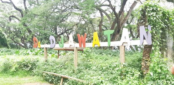 Hutan De Djawatan berjarak 45 menit dari Kota Banyuwangi. (Bonauli/detikcom)