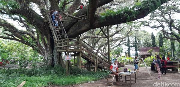 Di sana ada rumah pohon yang bisa digunakan oleh wisatawan. (Bonauli/detikcom)