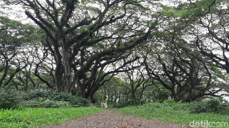 Hutan De Djawatan Banyuwangi