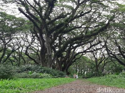 Hutan De Djawatan, Tempat Hijau Instagrammable Kebanggaan Banyuwangi