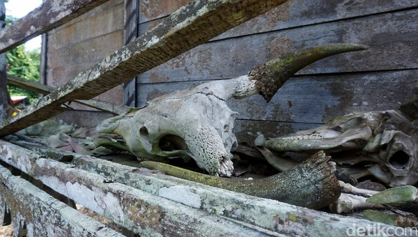 Tengkorak Sapi ini sebagai tanda atau lambang kendaraan jenazah ke alam kuburnya.