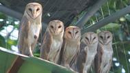 Via Vallen Lari Dengar Suara Rintihan, Awas Terkecoh Hewan-hewan Ini