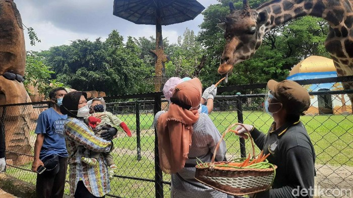 Menteri Sosial (Mensos) Tri Rismaharini mengisi libur tahun baru bersama keluarga di Surabaya. Mereka berwisata di Kebun Binatang Surabaya (KBS).