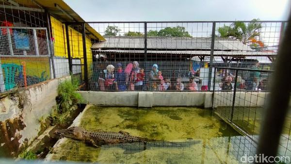 Jenis reptil yang ada di mini zoo di antaranya ular, iguana, kadal, buaya muara. (Bima Bagaskara/detikcom)