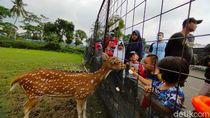 Foto: Serunya Libur Tahun Baru di Mini Zoo Kuningan