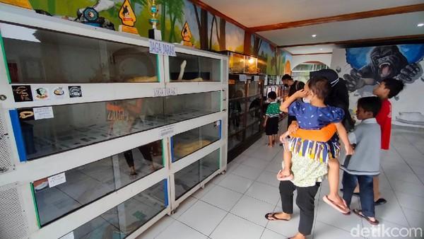 Ada banyak koleksi satwa seperti reptil hingga primata yang jarang wisatawan lihat. Jangan khawatirm tentunya satwa diawasi oleh petugas. (Bima Bagaskara/detikcom)