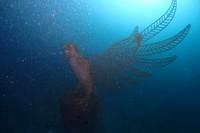 Restorasi terumbu karang ini merupakan bagian dari program Direktorat Jenderal Pengelolaan Ruang Laut (Ditjen PRL), Kementerian Kelautan dan Perikanan (KKP). Struktur tersebut membentuk cluster-cluster yang diharapkan memperkaya ekosistem bawah laut dan mampu menjadi daya tarik wisata ke depan. Foto: Kementerian Kelautan dan Perikanan