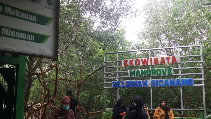 Ekowisata Manggrove Belawan Sicanang, Medan, ramai pengunjung di liburan tahun baru.