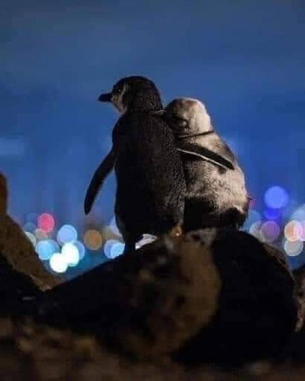 Mereka kedapatan saling menguatkan satu sama lain dengan cara saling berpelukan. Mereka berpelukan sambil melihat pemandangan indah lampu kota Melbourne saat malam. Mereka biasa melakukan hal itu selama berjam-jam. (dok. Thomas Baumgaertner)