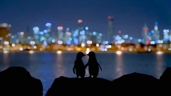 Foto jepretan fotografer bernama Thomas Baumgaertner ini begitu mengharukan. Foto ini berkisah tentang 2 penguin yang sama-sama kehilangan pasangan, namun keduanya tampak saling menguatkan satu sama lain. (dok. Thomas Baumgaertner)