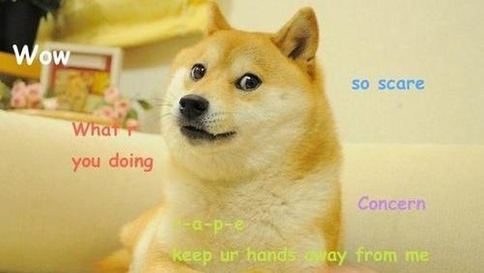 Meme Anjing Doge