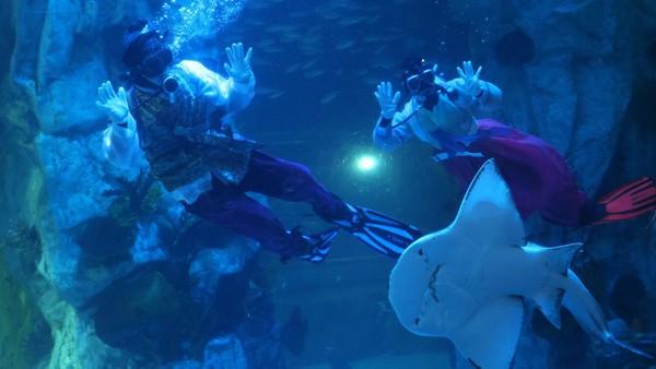 Dengan latar lampu berwana kuning dan biru, para penyelam berenang bersama ikan pari, hiu, dan ikan-ikan lainnya.