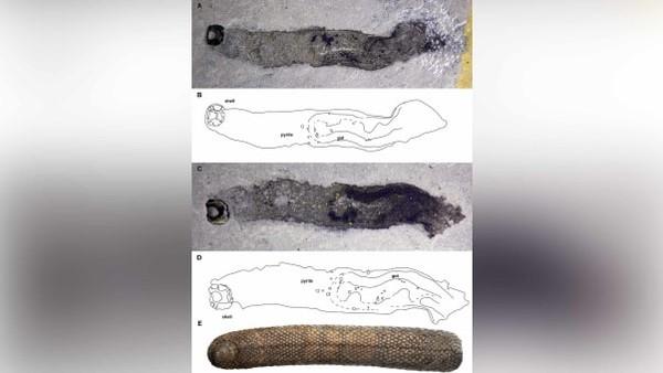 Para ilmuwan juga mendeskripsikan 122 spesies fosil baru, termasuk Armilimax pauljamisoni, yang terlihat seperti siput lapis baja.Hewan-hewan itu termasuk dalam 503 spesies baru yang dinamai oleh Museum Sejarah Alam London.