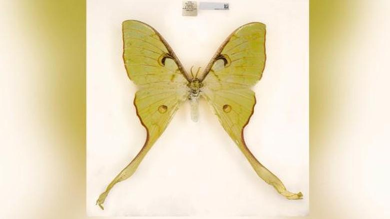 Spesies baru Museum Sejarah Alam London 2020