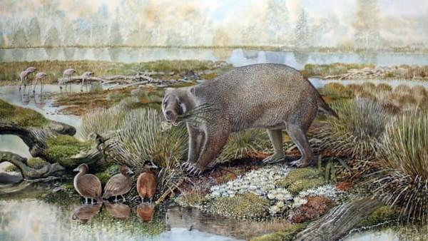 Para ilmuwan juga mendeskripsikan fosil marsupial mirip wombat raksasa bernama Mukupirna nambensis.Hewan berkantung raksasa itu hidup 25 juta tahun yang lalu di tempat yang sekarang disebut Australia. Mereka akan tumbuh dengan ukuran yang sama seperti beruang hitam.