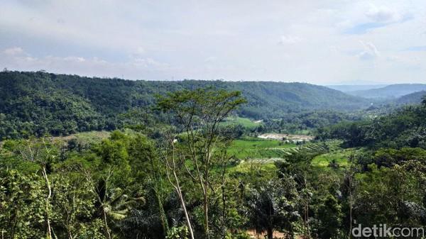 Kebun buah naga dikelilingi oleh perbukitab dan area pesawahan. Cocok untuk refreshing. (Dadang Hermansyah/detikcom)