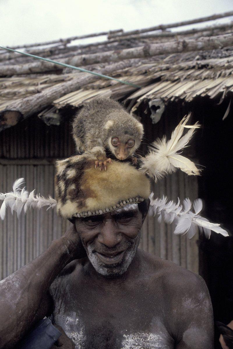 Sebelum Sapi dan Ayam, Dulu Kuskus Jadi Hewan Ternak Populer