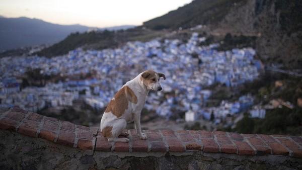 Absennya turis yang berfoto di samping pintu berukir ikonik dan tangga yang khas tampaknya membebaskan salah satu tempat yang paling banyak difoto di Maroko, memberi kesempatan kepada penduduknya untuk bersantai dan menyerap keindahan kota mereka sendiri yang tenang.