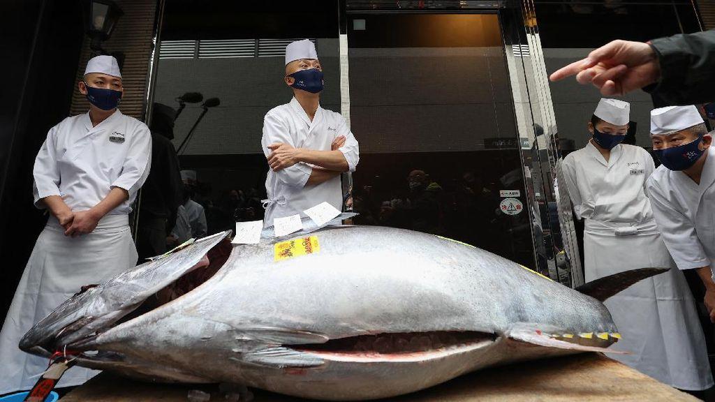 Tetap Gelar Lelang Saat Pandemi, Ikan Tuna Ini Terjual Rp 2,8 M