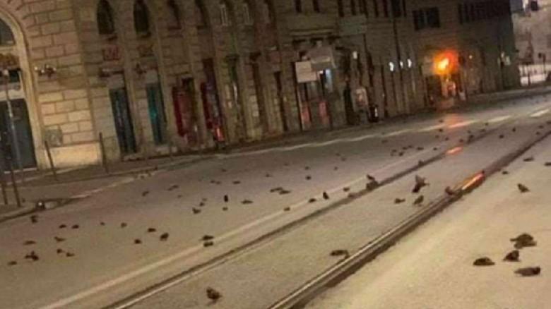 Misterius, Ratusan Burung Mati Tergeletak di Jalanan Roma