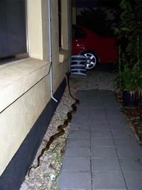 Tolong jangan salah fokus. Ini bukan pipa ya, tapi ular! (Bored Panda)