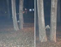 Raccoon in action! (Bored Panda)