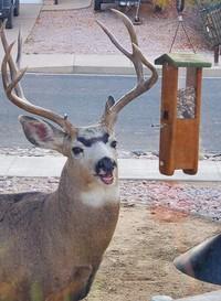 Siapa yang bisa mengalahkan cetarnya alis mata rusa ini? (Bored Panda)